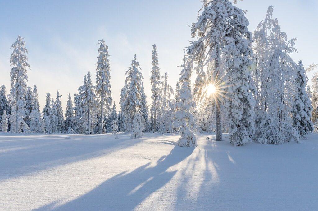 trees, winter, snow-4830285.jpg